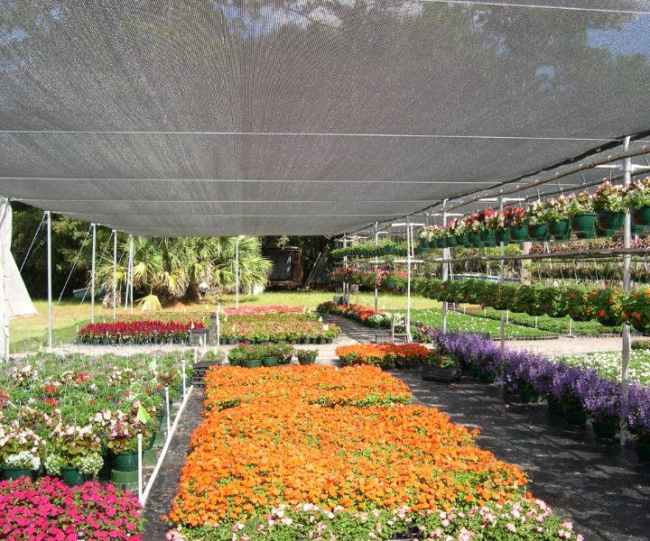 shade flowering plants