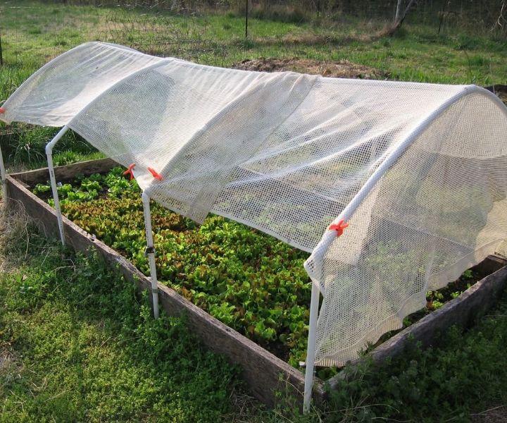 shade gardening ideas
