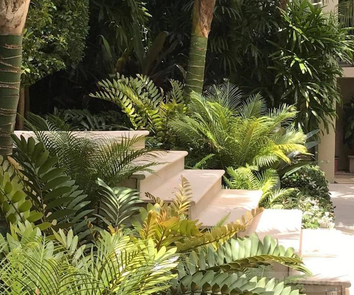 shade gardening plants