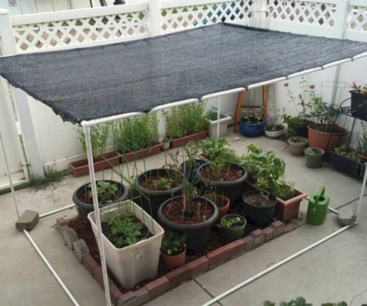shade perennials zone