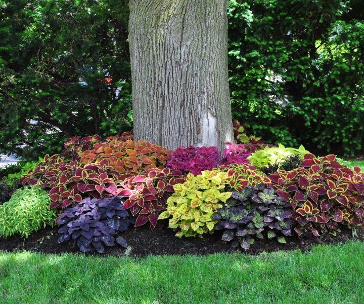shade shrubs deer resistant
