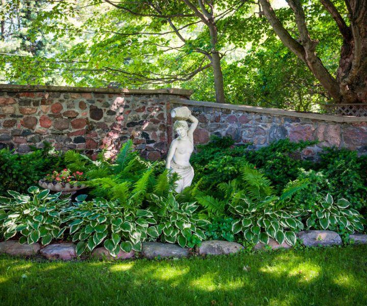 shade shrubs evergreen