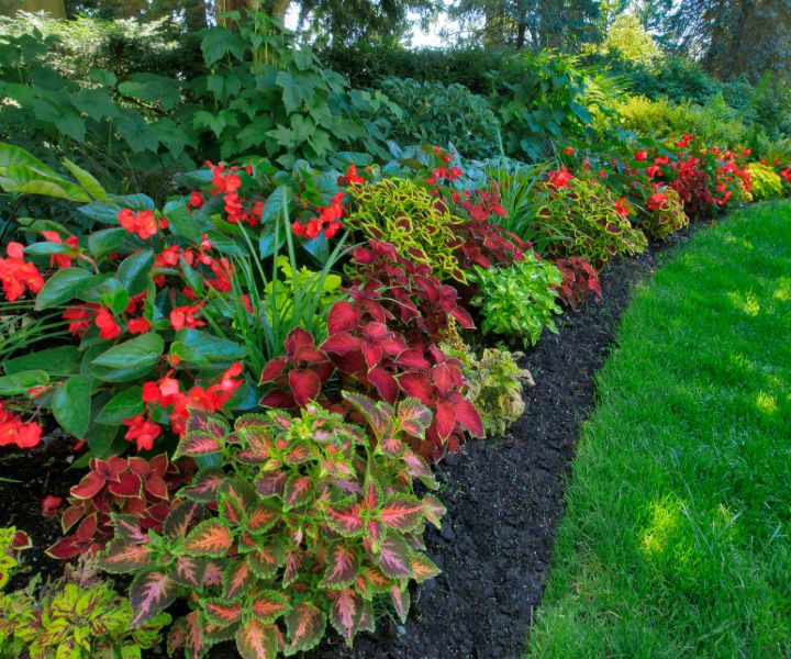shade shrubs zone