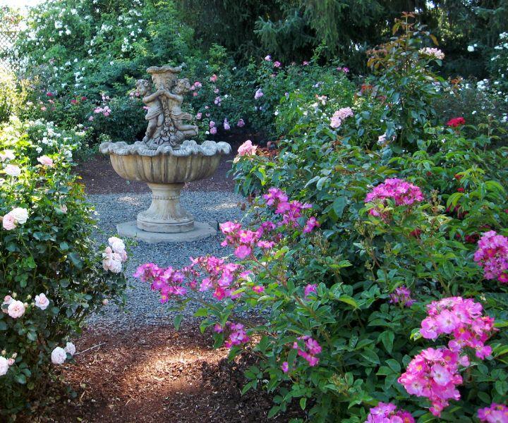 shade tolerant flowers