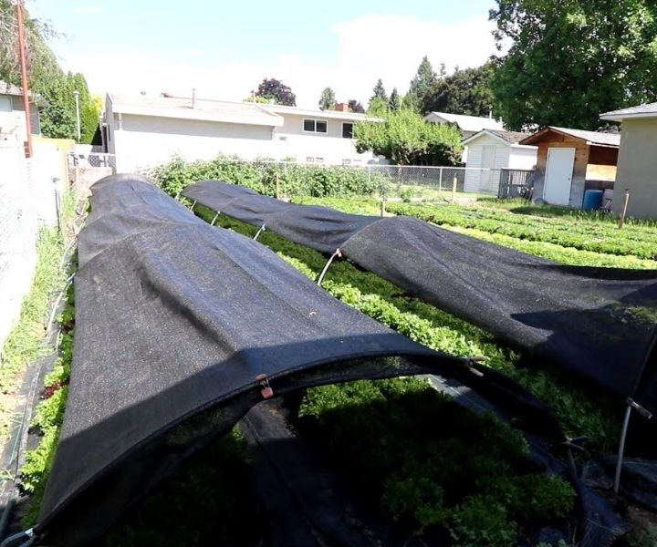 shade tolerant herbs