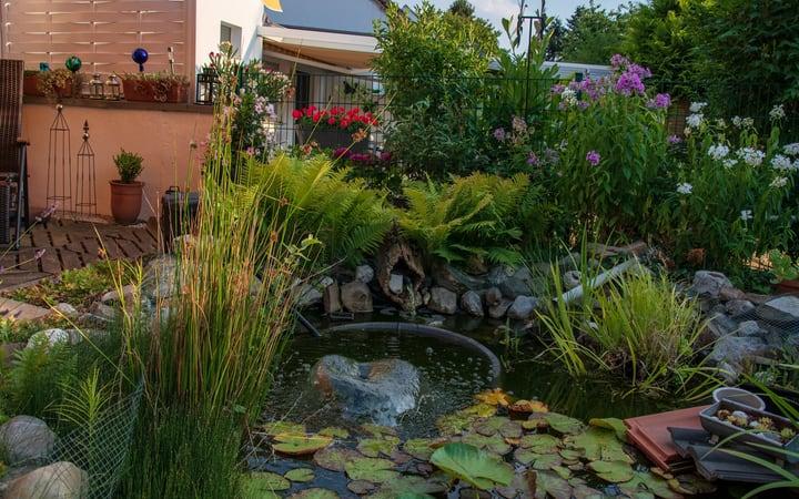 stunning water garden in the backyard