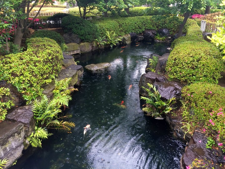 water gardening in a artificial river