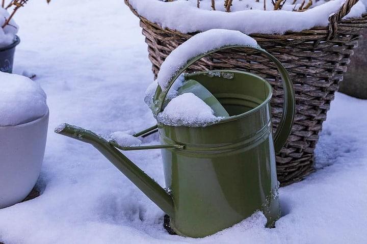 watering plants in winter