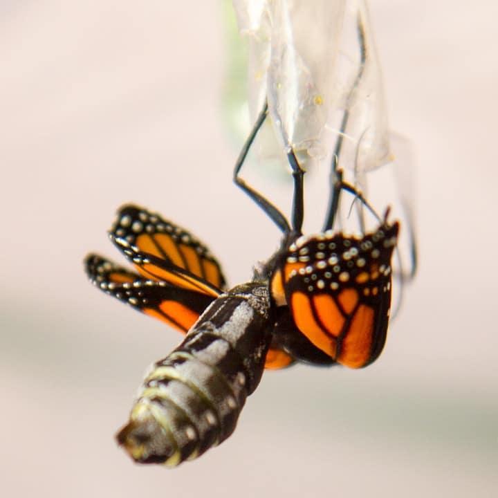 wet butterfly wings