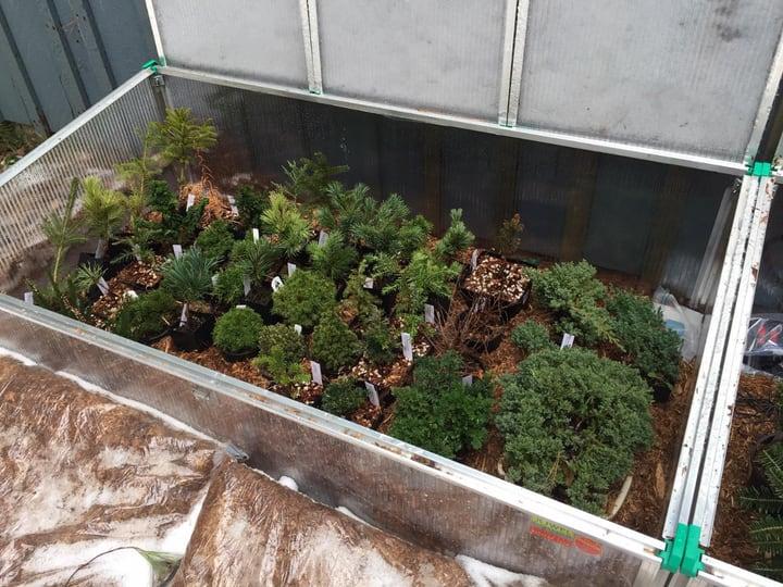 winter garden plants