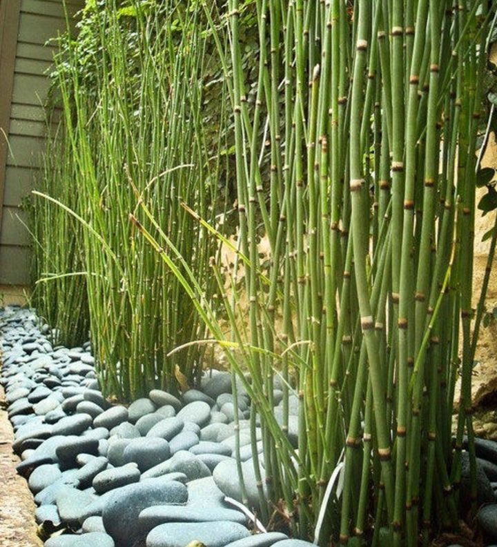 zen garden ideas on a budget