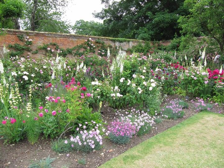 assorted rose garden