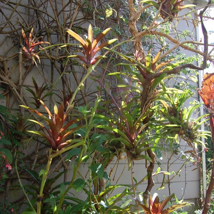 bromeliad fence wall garden