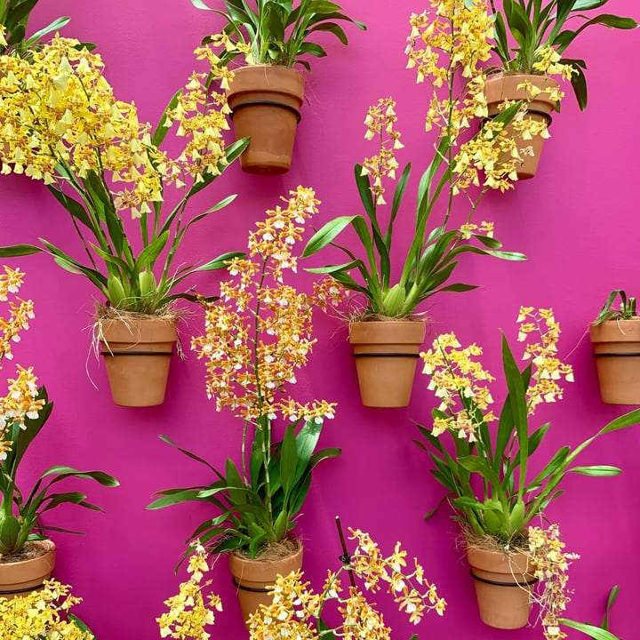 colorful flowers on wall garden