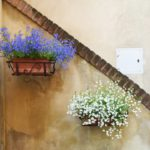 colorful wall plants