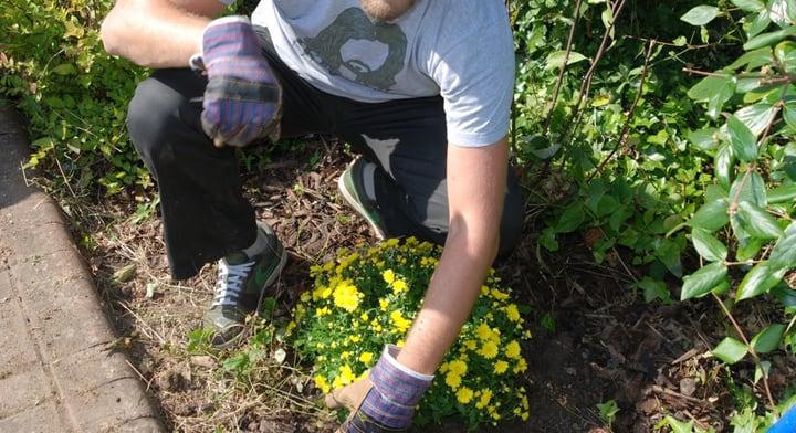 dividing perennial plants