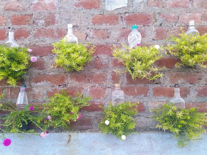 diy bottled air plants wall garden