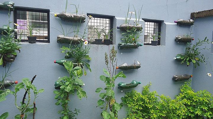 diy wall garden using repurposed bottles