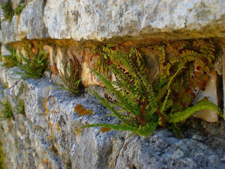 fern wall garden
