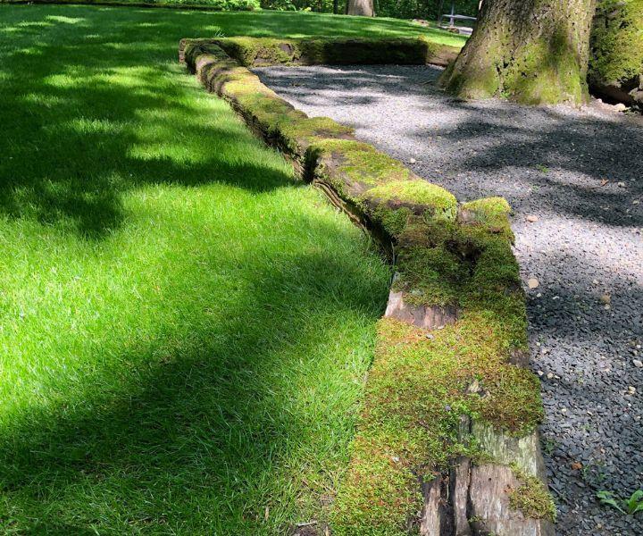 grow moss lawn