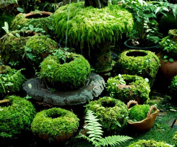 grow moss yard