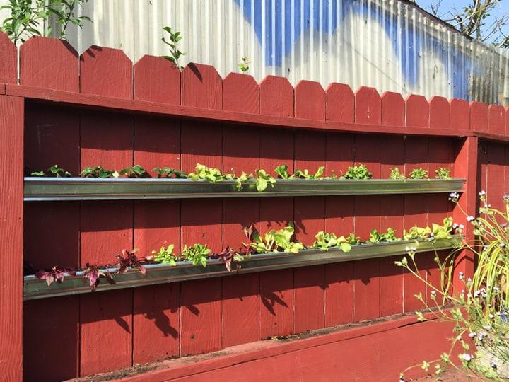 gutter plant wall garden