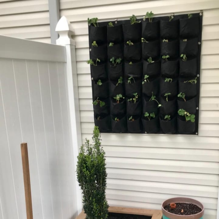 hanging planted wall outside