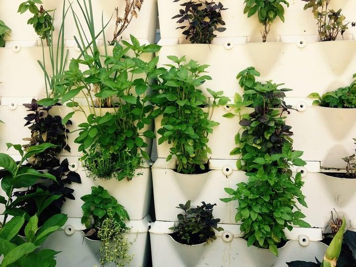 herb hydroponic garden