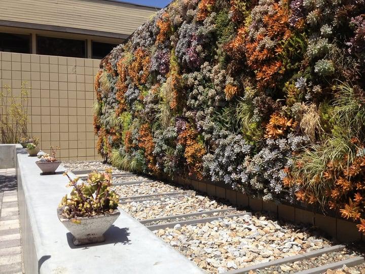 huge backyard succulent wall garden