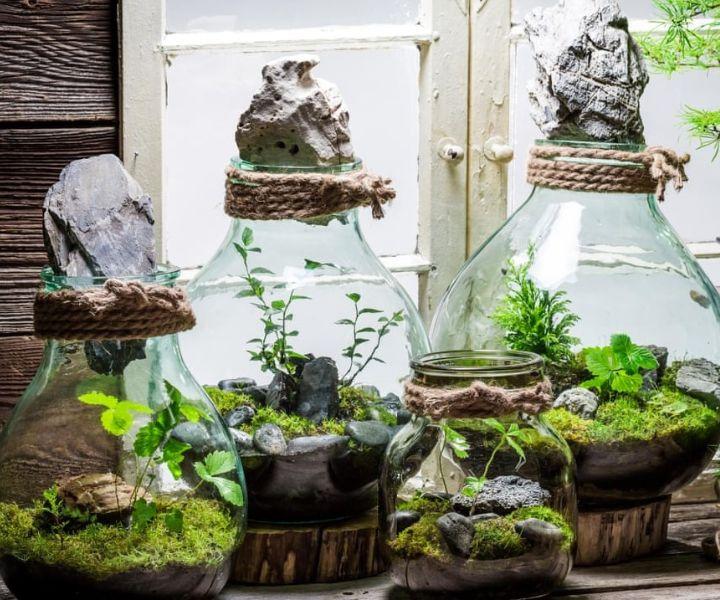 indoor moss gardening