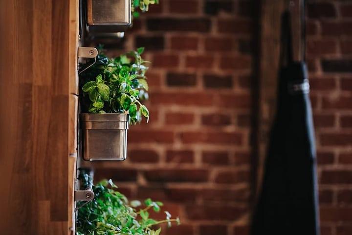 indoor wall garden