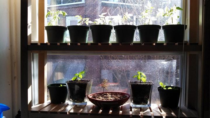 indoor windowsill vegetable garden