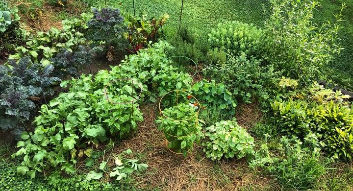late spring vegetable garden