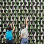 maintaining plant walls