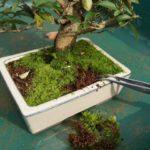 making a mini moss garden