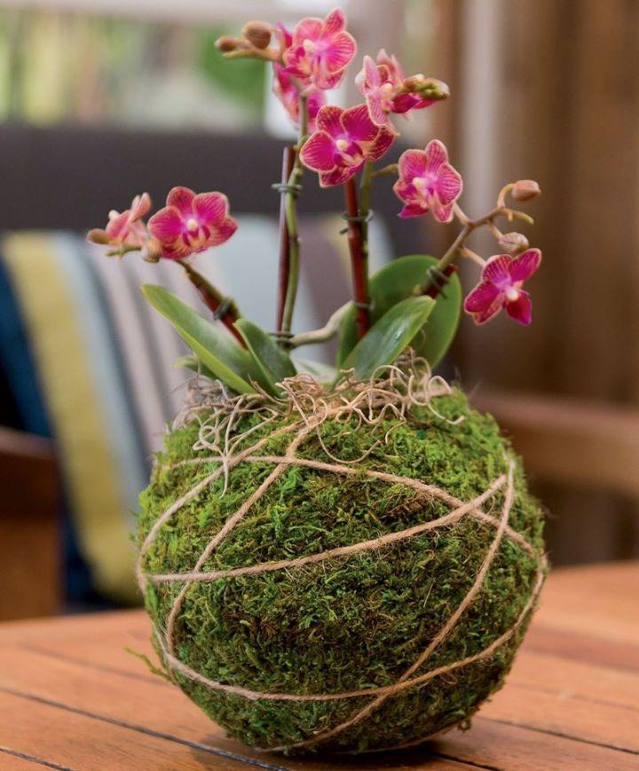 moss ball gardening