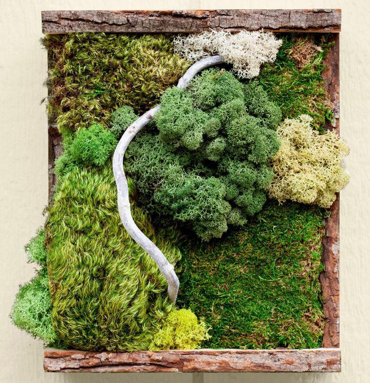 moss grow kit