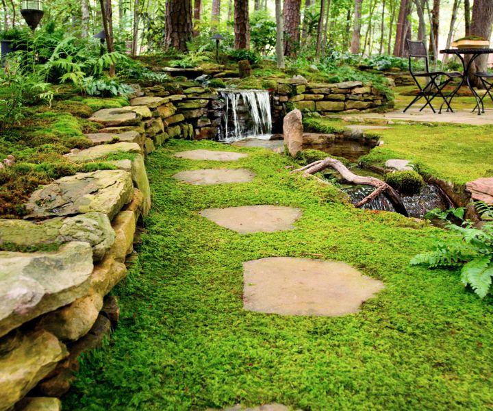 moss grow on rocks