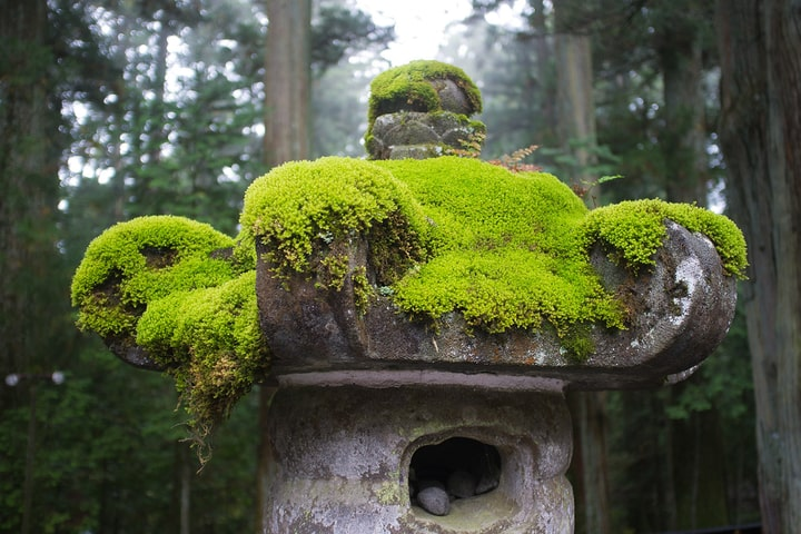 moss growing on statue