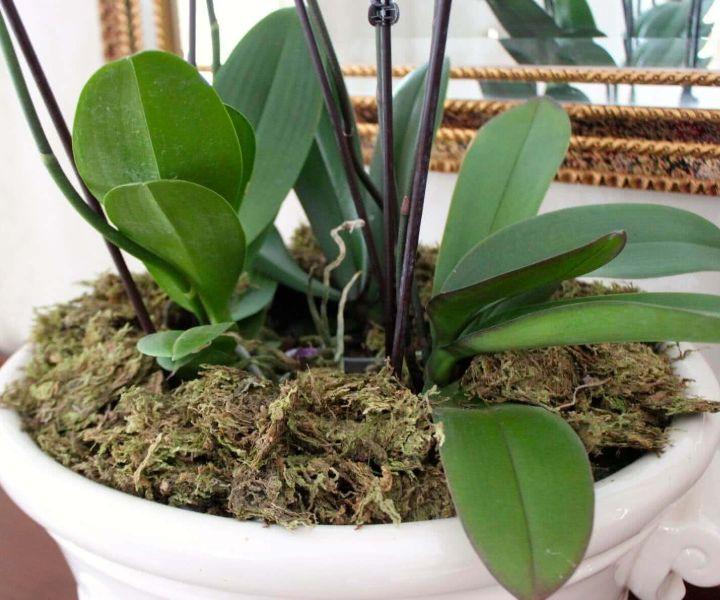 moss sphagnum grow