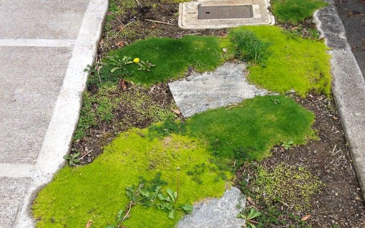 moss transplanting patchwork