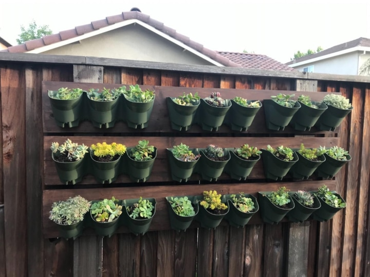 outdoor planted wall fence