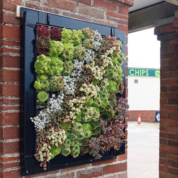 outdoor succulent wall garden