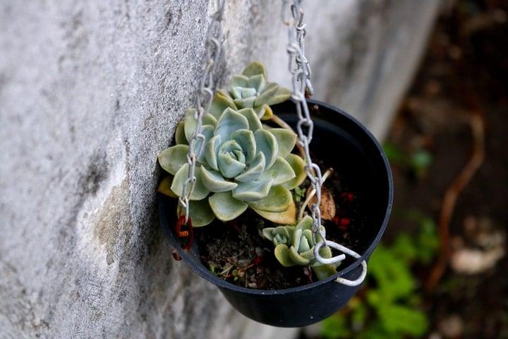 outdoor wall garden with hanging succulent pot