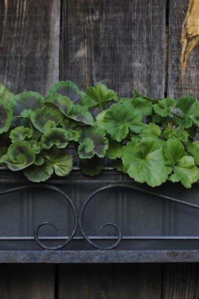 outdoor wooden wall garden