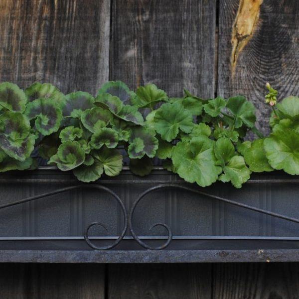 outdoor wooden wall garden