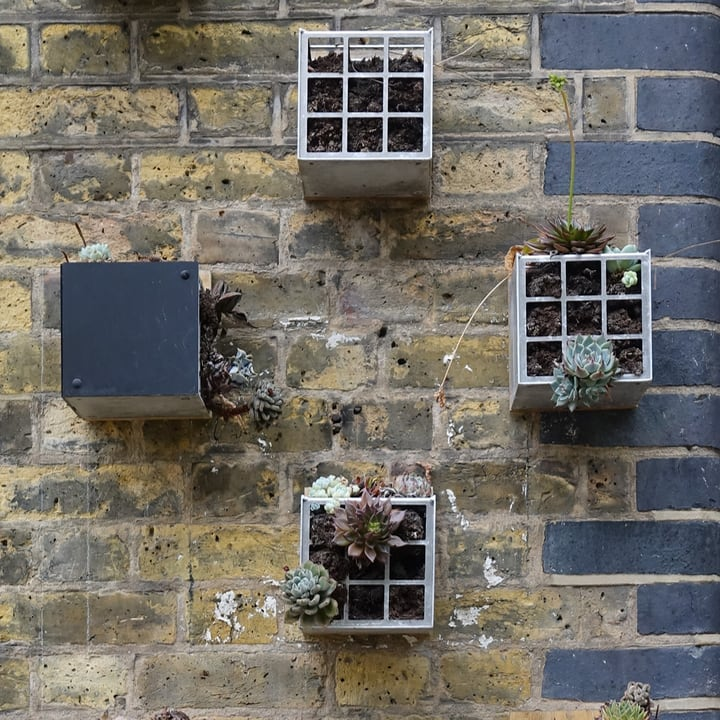 pallet succulent wall garden