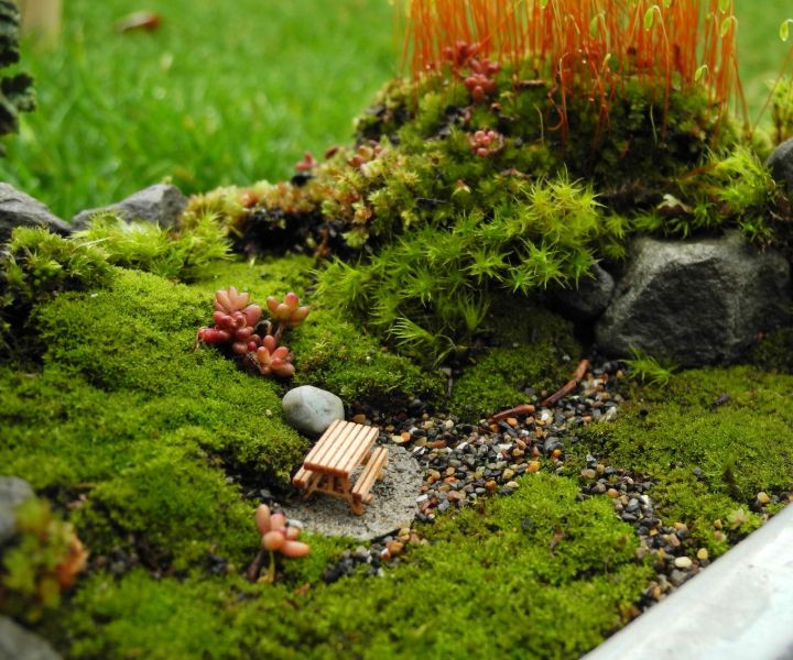 peat moss for gardening