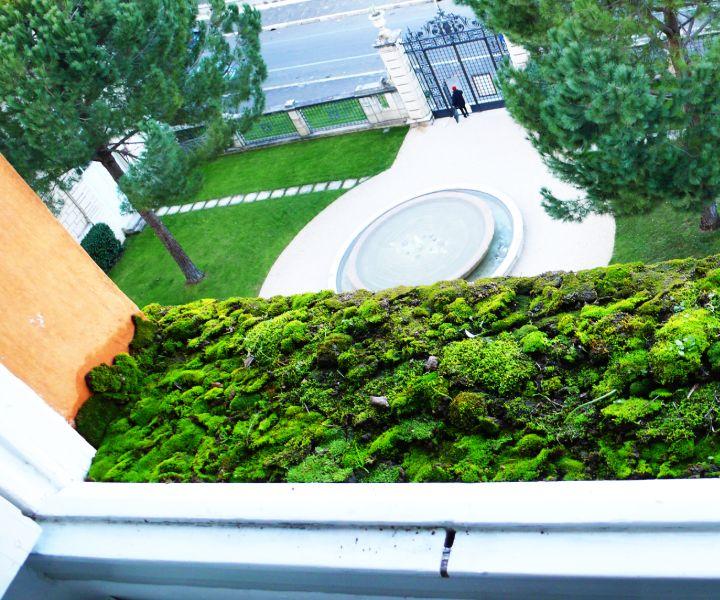 peat moss in gardening