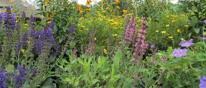 perennials in spring